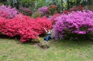 Sheranna in Azalea Garden Homepage Image